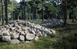 Forssman Übersetzer Steinrosen auf Gotland